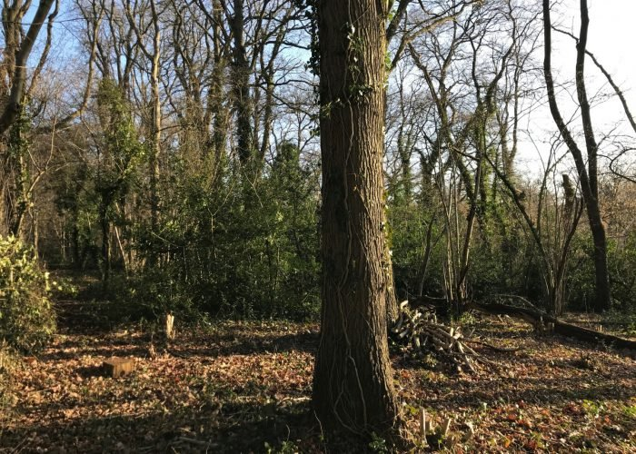woods clearing